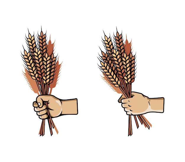 Vetorial, ilustração, de, mão, agarre, grupo, de, cevada