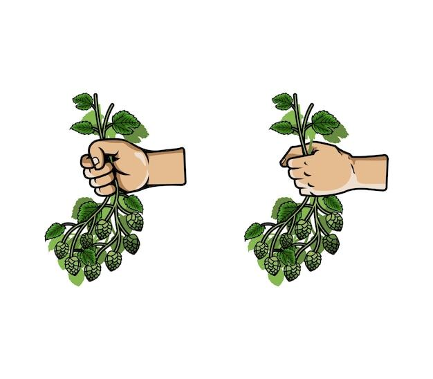 Vetorial, ilustração, de, mão, junte grupo, de, lúpulo
