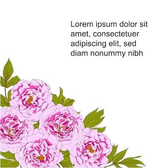 Vetorial, ilustração, de, peony, flores
