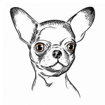 Vetorial, imagem, de, um, cachorro chihuahua