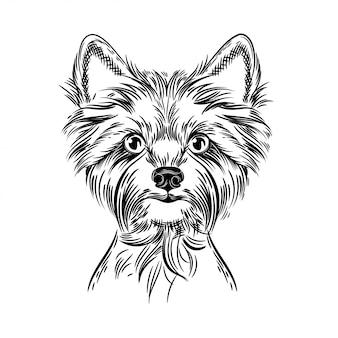 Vetorial, imagem, de, um, yorkshire terrier
