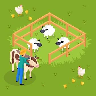 Vida de agricultores comuns isométrica com gado e animais de fazenda, ovelha e caráter humano, abraçando a ilustração de vaca