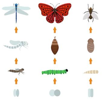 Vida de nascimento de insetos