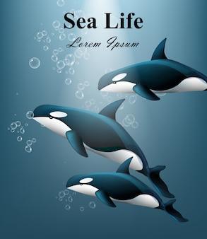 Vida marinha, com, baleias, submarinas