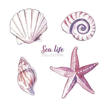 Vida marinha em aquarela