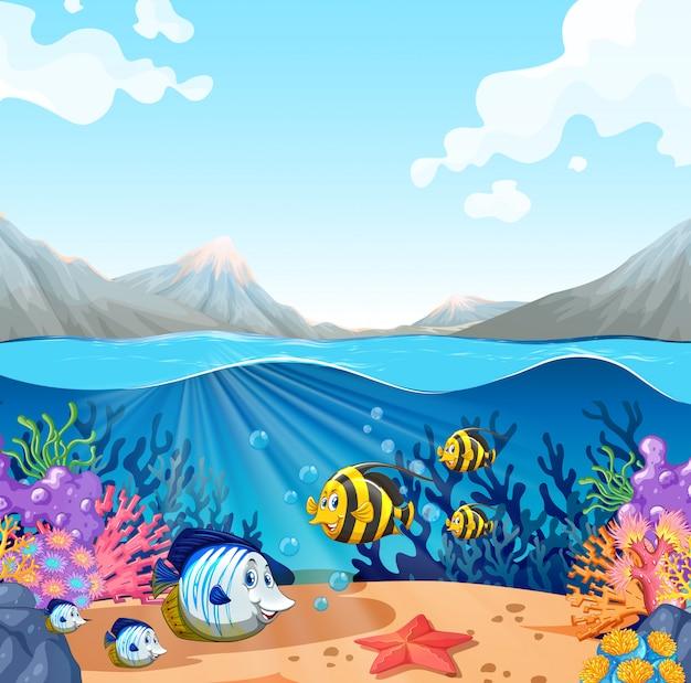 Vida marinha subaquática bonita