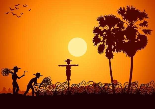 Vida no campo do homem asiático colhe arroz no nascer do sol