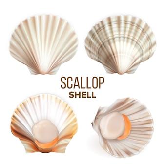 Vieiras com carne no conjunto de frutos do mar shell