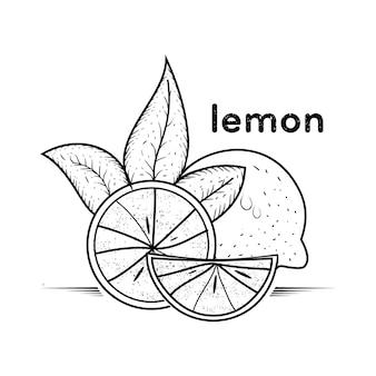 Vintage de limão mão desenhada