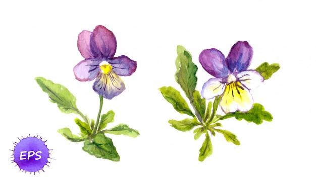 Violetas pintadas em aquarela