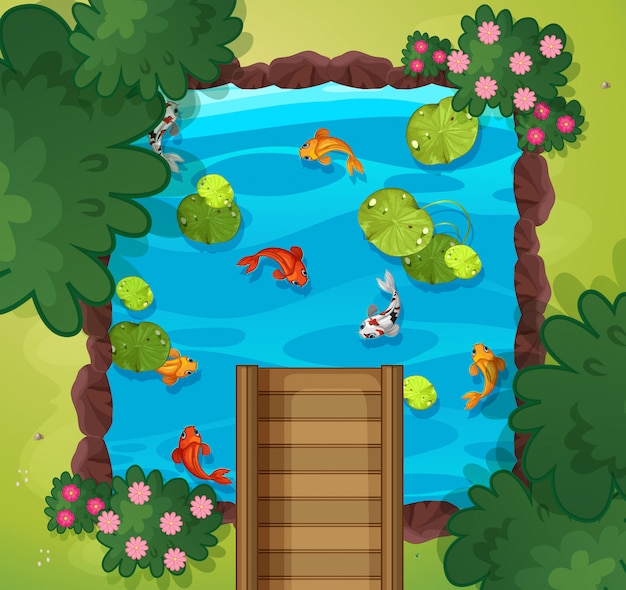 Vista aérea, de, pesque lagoa