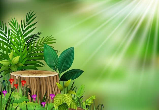 Vista da planta botânica na luz do sol