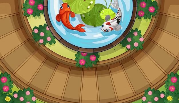 Vista de cima do peixe koi nadando na lagoa