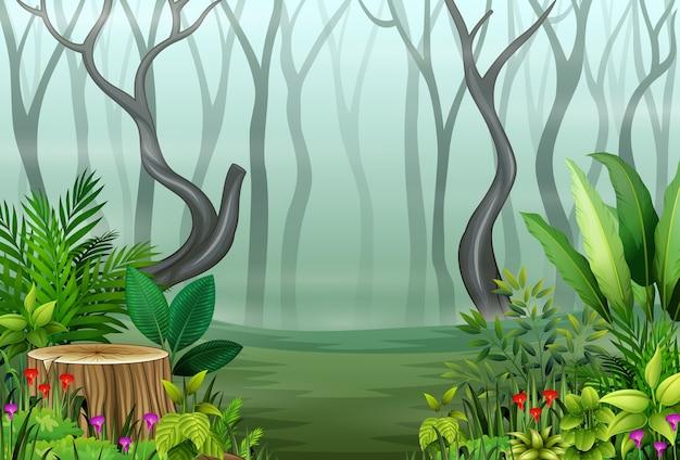 Vista, de, floresta, plantas, em, a, nevoeiro