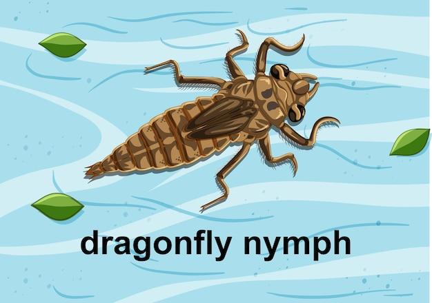 Vista superior da ninfa da libélula na água