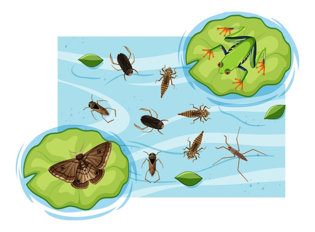 Vista superior de insetos aquáticos na lagoa
