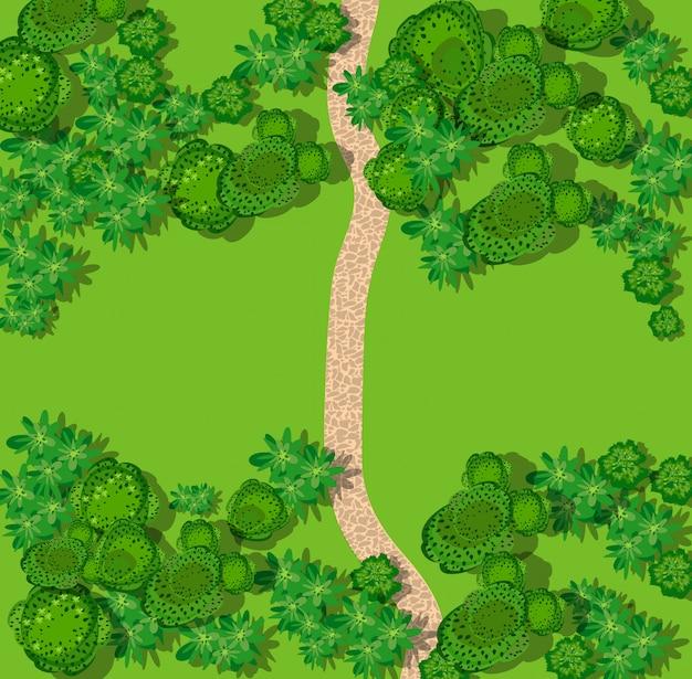 Vista superior do campo com floresta