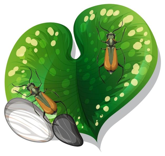 Vista superior do inseto em uma folha isolada