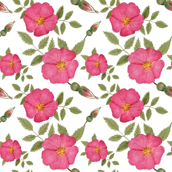 Wild rose seamless pattern por aquarela rastreada
