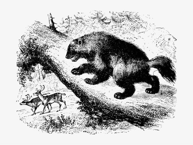 Wolverine em uma caçada