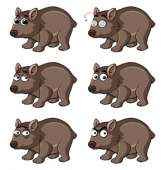 Wombat com diferentes emoções