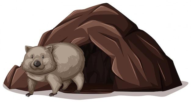 Wombat saindo da caverna