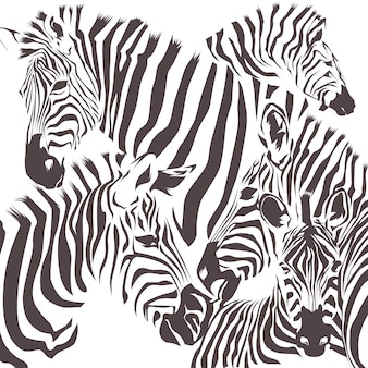 Zebra animal vector