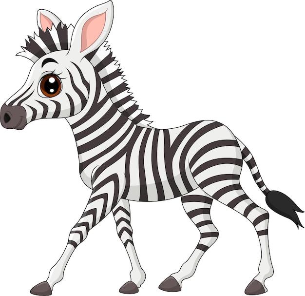 Zebra bebê fofa isolada