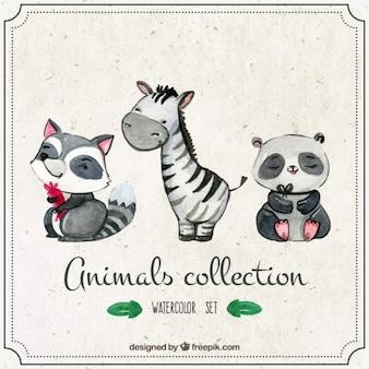 Zebra com aquarela animais adoráveis