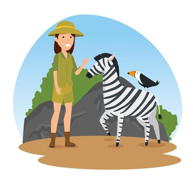 Zebra com pássaros animais selvagens e mulher de safari