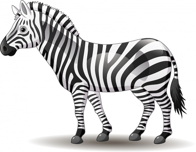Zebra engraçado dos desenhos animados posando isolado no fundo branco