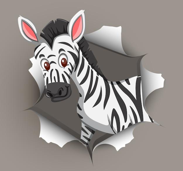Zebra fofa saindo da parede rachada