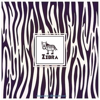 Zebra fundo da cópia