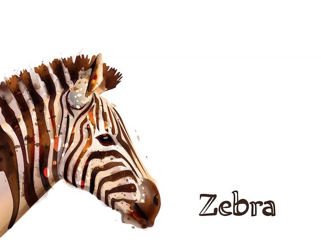 Zebra na aguarela branca