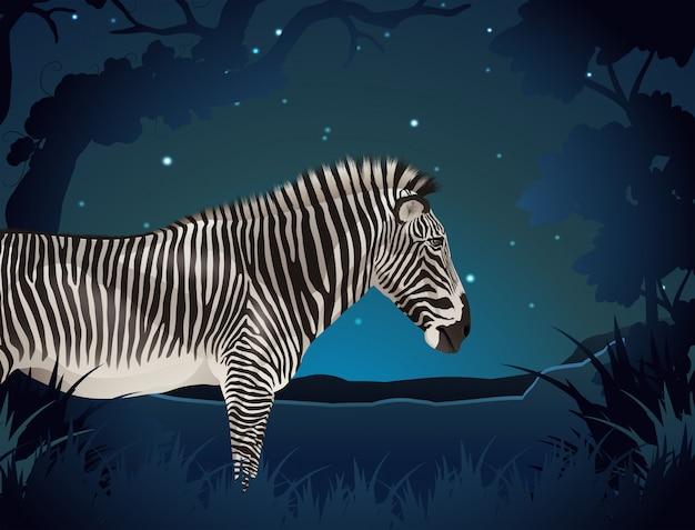 Zebra na floresta à noite