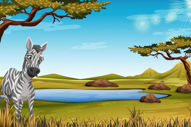 Zebra na floresta