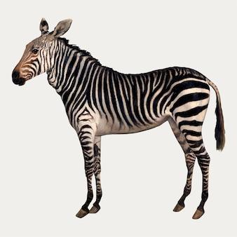 Zebra pintando em estilo vintage, remixado de obras de jacques-laurent agasse