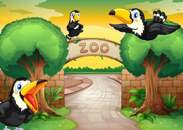 Zoo e pássaros