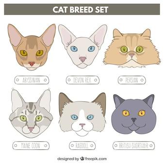 A mano gatto disegnato insieme di razza