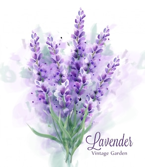 Acquerello bouquet di lavanda