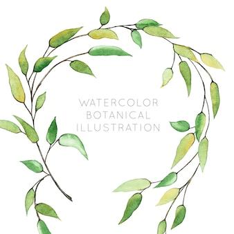Acquerello corona botanica con verde