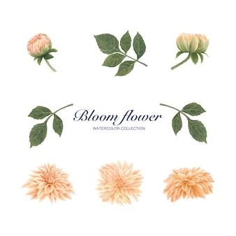 Acquerello dell'elemento del fiore di fioritura su bianco per uso decorativo.