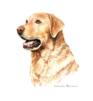 Acquerello di cane labrador retriever.