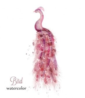 Acquerello di pavone rosa