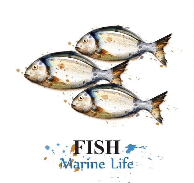 Acquerello di pesce piccolo