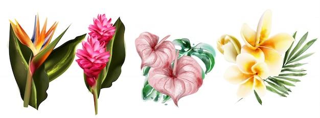 Acquerello di raccolta di fiori tropici