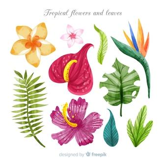 Acquerello fiori tropicali e foglie