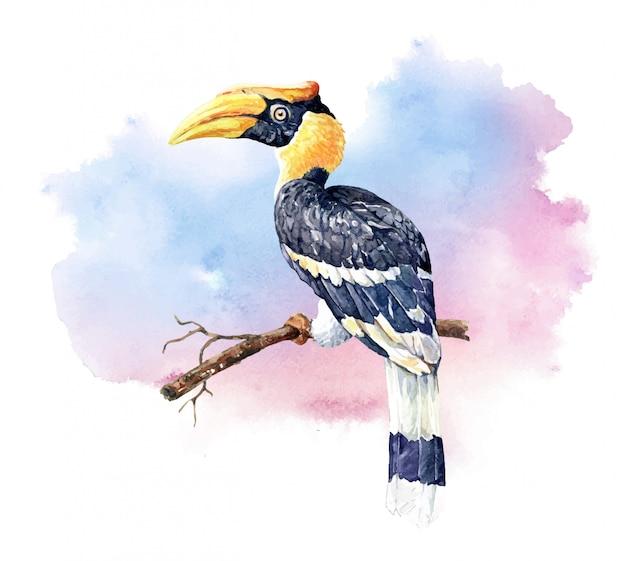 Acquerello grande uccello bucero sui rami.