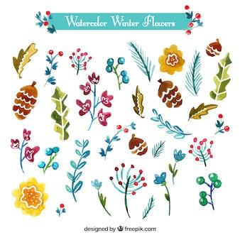 Acquerello inverno fiori e foglie
