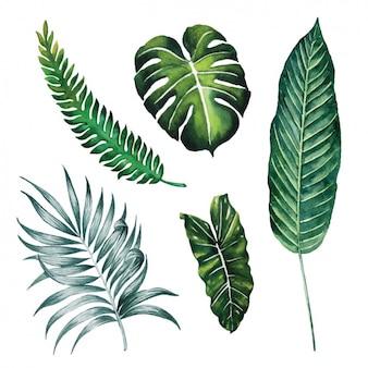 Acquerello leaves collection